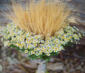 букет из ромашек и пшеницы