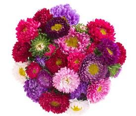 букет из цветов астры микс разноцветной