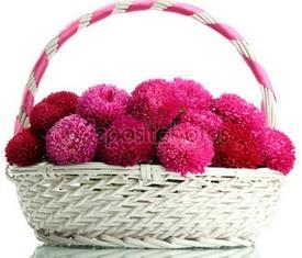 корзина много розовых астр