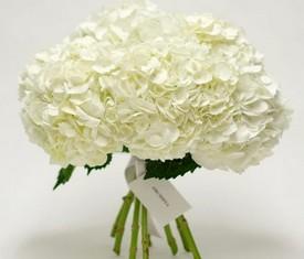 букет из цветов белой гортензии