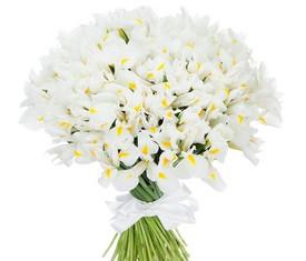 букет из цветов белых ирисов