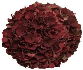 букет из 5 цветов бордовой гортензии