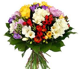 Букет из 49 цветов разноцветных фрезий ассорти