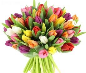 букет из 49 цветов разноцветных тюльпанов микс