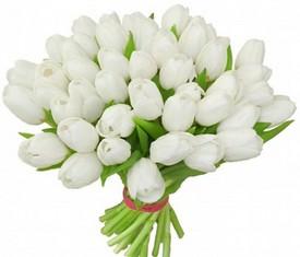 букет из 49 цветов белых тюльпанов