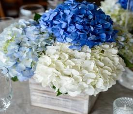 цветы гортензии в кашпо