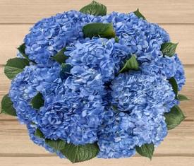 охапка из цветов голубой гортензии