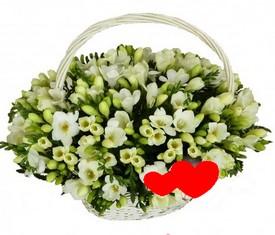 корзина из 151 цветка белой фрезии