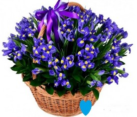 корзина из 51 цветка синего ириса
