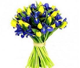букет из 25 цветов желтых тюльпанов и 20 синих ирисов купить