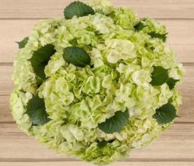 букет из зеленых цветов гортензии купить