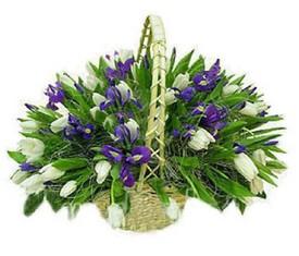 корзина цветов из 49 белых тюльпанов и 20 синих ирисов купить