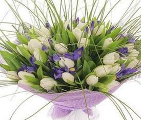 букет из 25 цветов белых тюльпанов и 20 синих ирисов