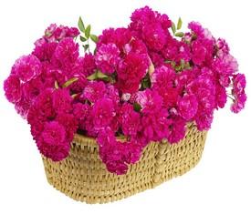 корзина из 101 цветка малиновой гвоздики