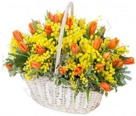 корзина из цветов мимозы и оранжевых тюльпанов