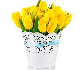 17 желтых цветов тюльпанов в кашпо