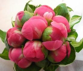 букет из 9 цветов корраловых пионов