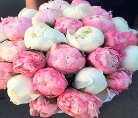 29 белых и розовых пионов с доставкой