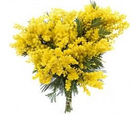 цветы мимозы на 8 марта