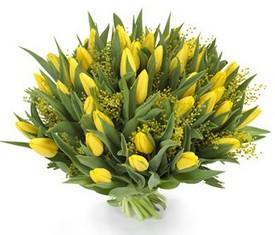 45 желтых тюльпанов и мимоза купить