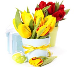 7 тюльпанов в кашпо