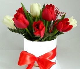 9 цветов тюльпанов в коробке