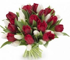 21 белый и красный тюльпан на 8 марта