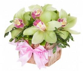 5 орхидей и зелень