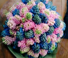 букет из 101 разноцветного гиацинта микс