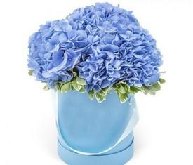 3 голубых гортензии в шляпной коробке купить