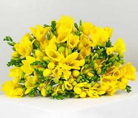 букет из 49 желтых фрезий
