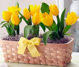 9 цветов тюльпанов в кашпо