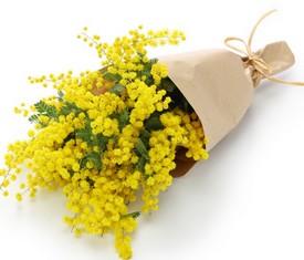 букет из цветов мимозы