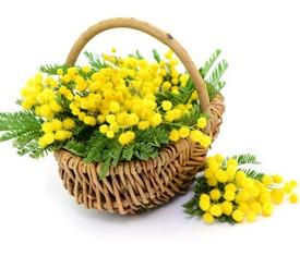 корзина из цветов мимозы