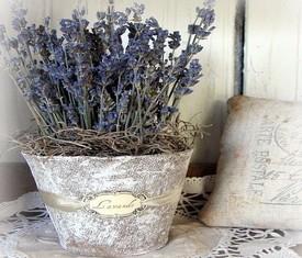 цветы лаванды в кашпо