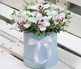 орхидеи цимбидиум в подарочной шляпной коробке
