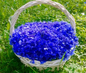 корзина 101 цветок василек купить