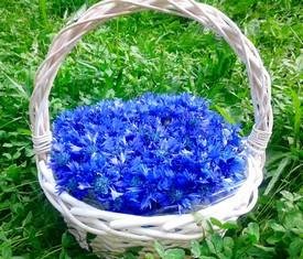 корзина из 55 цветов васильков