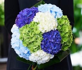 9 цветов гортензии ассорти