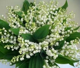 букет из 75 цветов ландышей