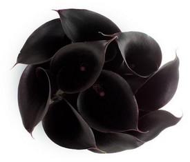 букет из 9 цветов черных калл