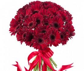 букет из 19 цветов бордовых гербер