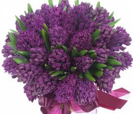 букет из 51 фиолетового гиацинта