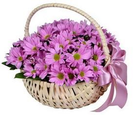 25 розовых хризантем в корзине