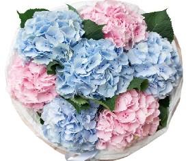розовые и голубые цветы гортензии в букете