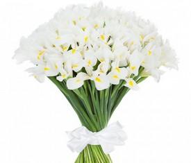 букет из 49 цветов белых ирисов