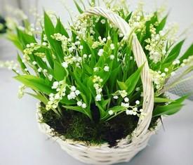 корзина из 25 цветов ландышей и мха