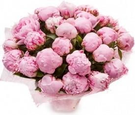букет из 25 розовых пионов сара бернар