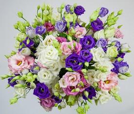 букет из 29 цветов разноцветных лизиантусов микс