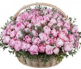 корзина из 101 цветка розового пиона